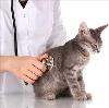 Ветеринарные клиники в Селтах